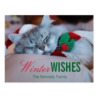 Cat with christmas hat and scarf, sleeping cat postcard
