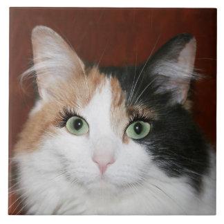 Cat with eyelashes tiles