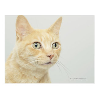 Cat with eyes open wide postcard