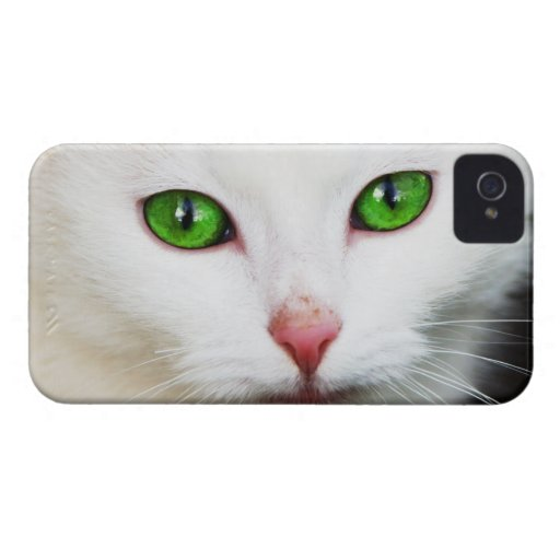 Cat with Green Eyes BlackBerry Bold Case