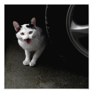 Cat with Mustache Photo Print