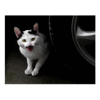 Cat with Mustache Postcard
