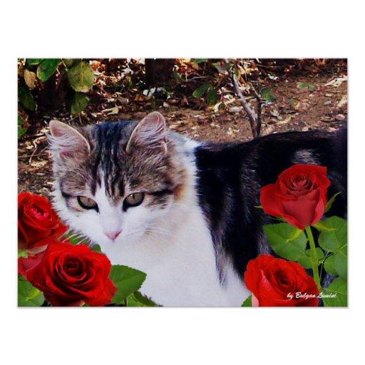 CAT WITH RED ROSES PRINT