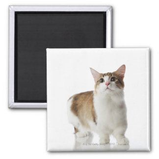 Cat with short feet square magnet