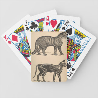 Cat with skeleton bicycle playing cards