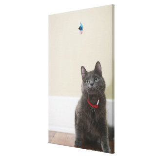 Cat with toy stretched canvas prints