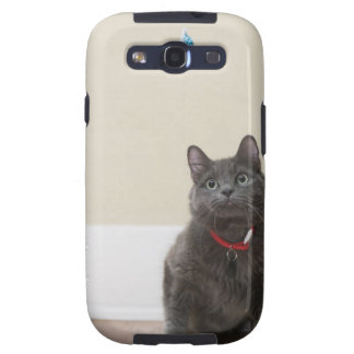 Cat with toy galaxy SIII covers