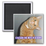 cat wtf magnet