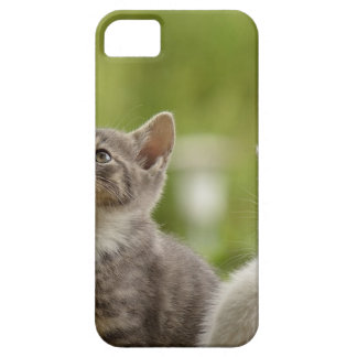 Cat Young Animal Curious Wildcat Animal Nature Case For The iPhone 5