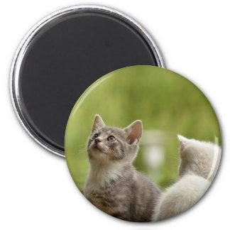 Cat Young Animal Curious Wildcat Animal Nature Magnet