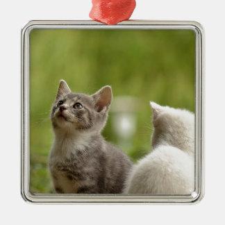 Cat Young Animal Curious Wildcat Animal Nature Metal Ornament