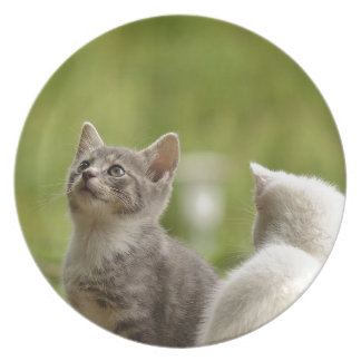 Cat Young Animal Curious Wildcat Animal Nature Plate