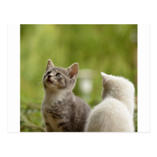 Cat Young Animal Curious Wildcat Animal Nature Postcard