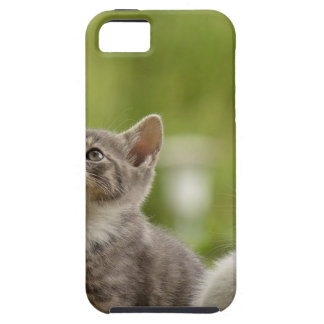 Cat Young Animal Curious Wildcat Animal Nature Tough iPhone 5 Case