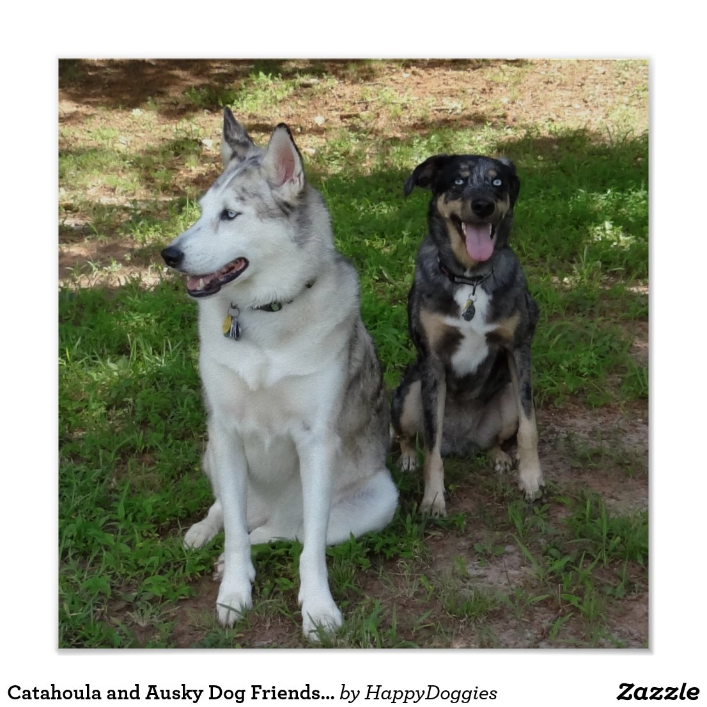 catahoula_and_ausky_dog_ ...