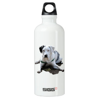 Catahoula Cur Laying Down Water Bottle