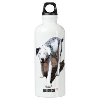 Catahoula Cur Water Bottle
