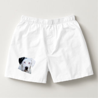 Catahoula Hound Dog Boxers