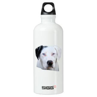 Catahoula Hound Dog Water Bottle