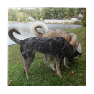 Catahoula Leopard Dog and Ausky Dog Sniffing Ceramic Tile