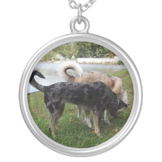 Catahoula Leopard Dog and Ausky Dog Sniffing Jewelry