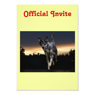 Catahoula Leopard Dog Running on Sunset 13 Cm X 18 Cm Invitation Card