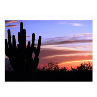 Catalina Mountains Sunset Postcard