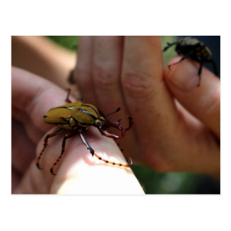 Catching Coleoptera Postcard