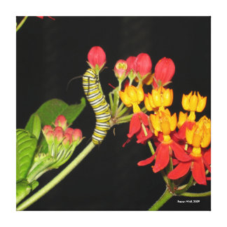 Caterpillar canvas print, The Art of Steven Wolf Stretched Canvas Print
