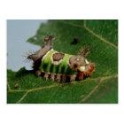 Caterpillar Eating a Leaf Postcard