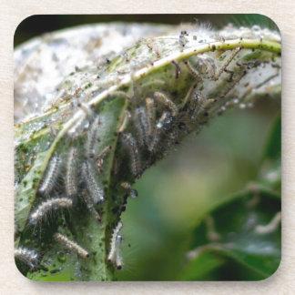 Caterpillar Hatch Cocoon Rain Fall Coaster