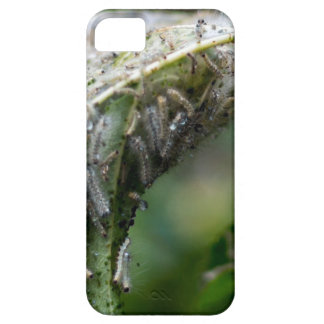 Caterpillar Hatch Cocoon Rain Fall iPhone 5 Cases