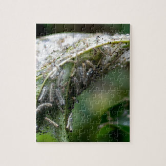 Caterpillar Hatch Cocoon Rain Fall Jigsaw Puzzle