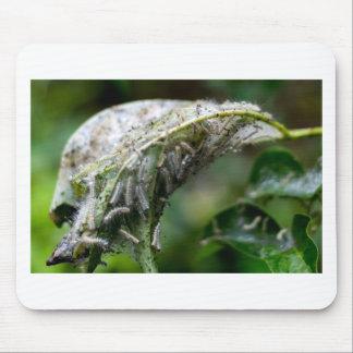 Caterpillar Hatch Cocoon Rain Fall Mouse Pad
