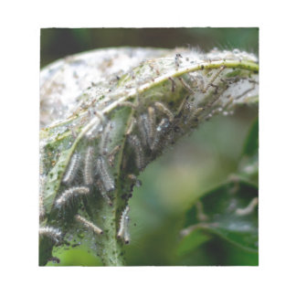 Caterpillar Hatch Cocoon Rain Fall Notepad
