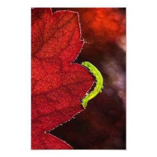 Caterpillar Photo Print
