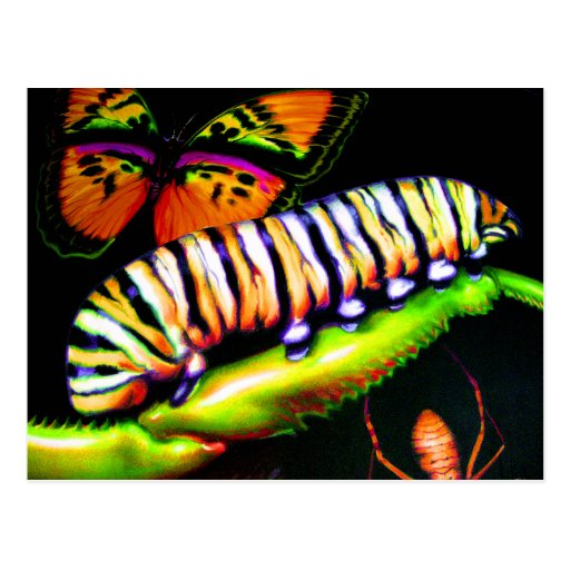 Caterpillar with Butterfly and Spider Art Post Cards