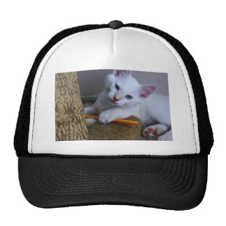 cathat mesh hats