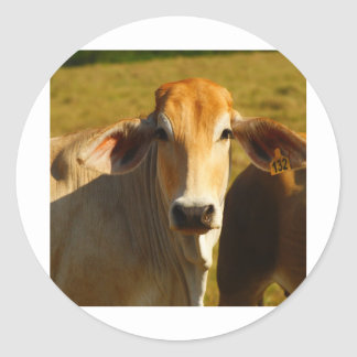 Cathine the cute cow classic round sticker