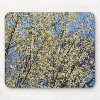 Catkins in spring mouse mat