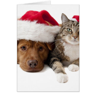 Cats and dogs - Christmas cat - christmas dog Card