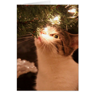 Cats and lights - Christmas cat -christmas tree Card