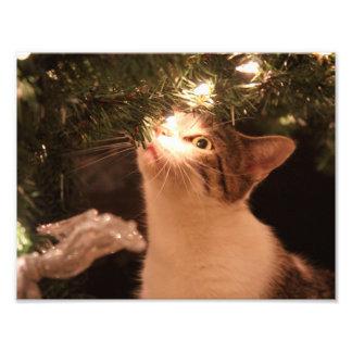 Cats and lights - Christmas cat -christmas tree Photo Print