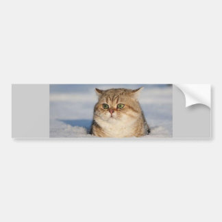 cats_and_snow7 bumper sticker