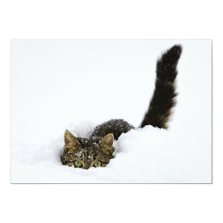 cats_and_snow_ (4) 13 cm x 18 cm invitation card