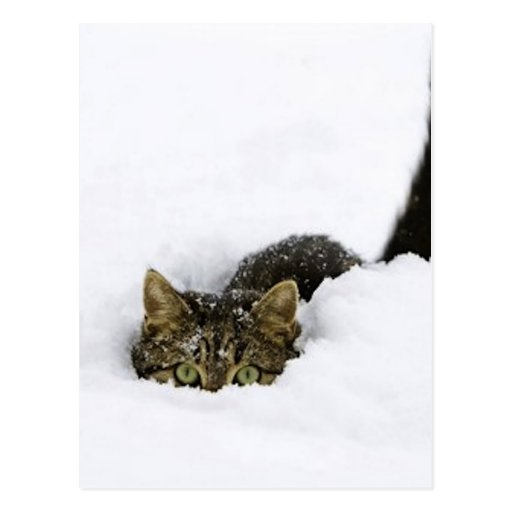 cats_and_snow_ (4) postcard