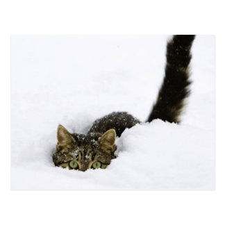 cats_and_snow_ 4 postcards