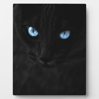 cats blue eyes display plaque