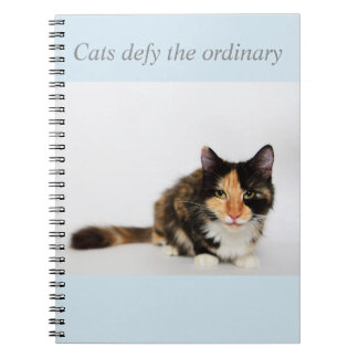 """Cats defy the ordinary"" Phoebe Notebook"
