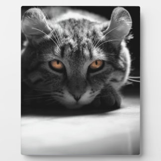 Cat's eye product plaque